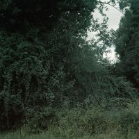 Still Life Nº III. Net & Woods I